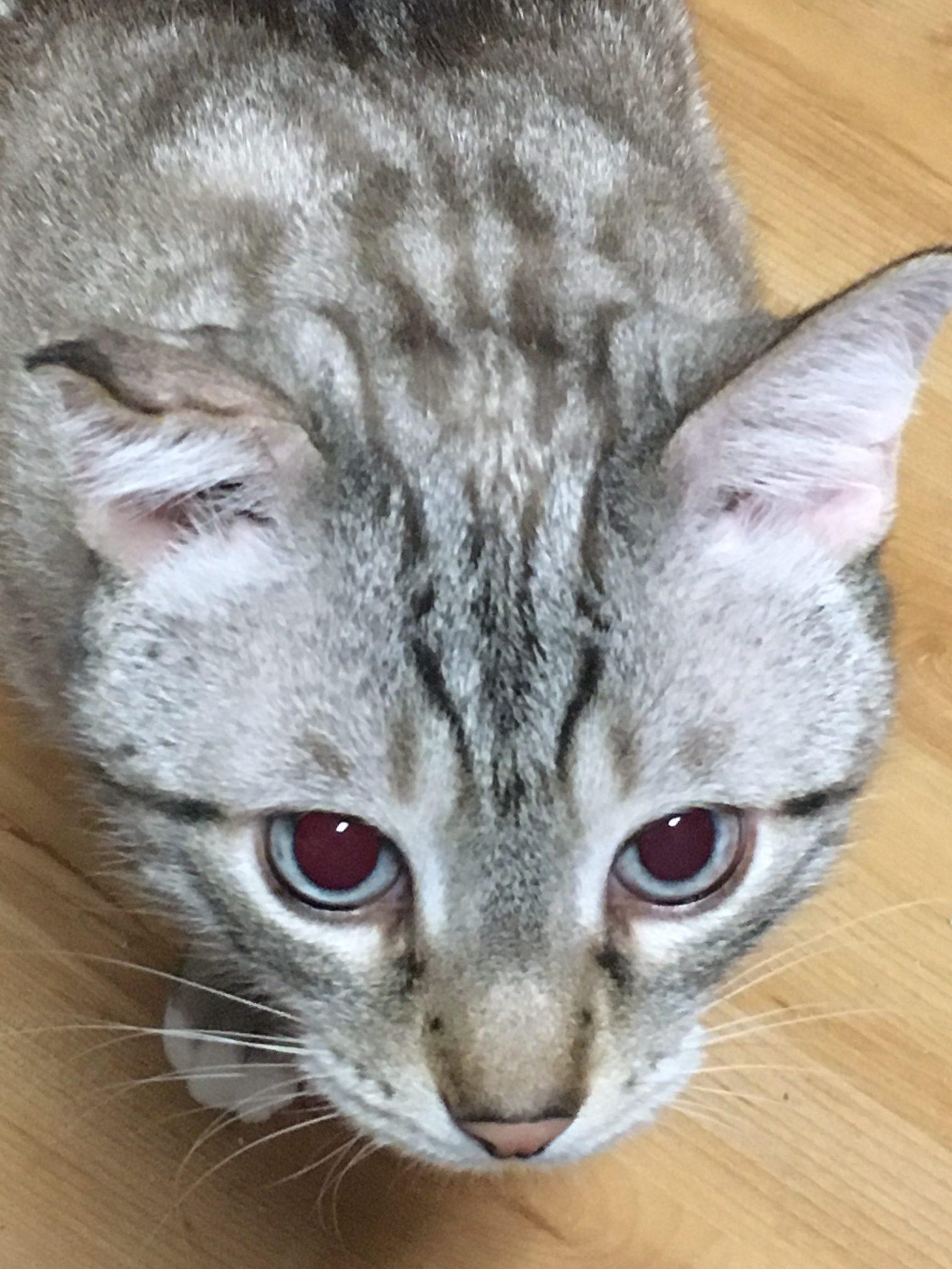 Another Requisite Cat Post - J. M. Levinton