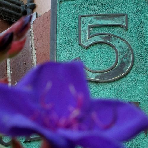 5 writer photo
