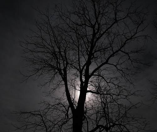 tree moonlight photo