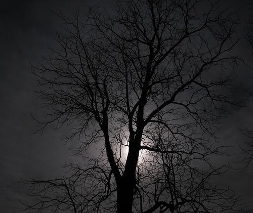 tree moonlight photo