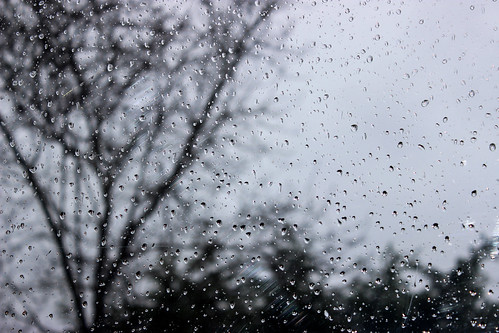 trees in rain photo